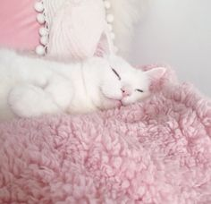 Image about cute in kawaii by 다솜 김 on We Heart It Baby Pink Aesthetic, Cat Aesthetic, Aesthetic Drawing, Aesthetic Dark, Baby Cats, Cats And Kittens, Kawaii, Back In The 90s, Cat Valentine