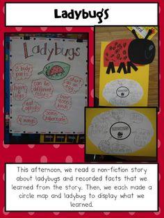 The Grouchy Ladybug -- Ladybugs Circle Map Insect Activities, Spring Activities, Science Activities, Classroom Activities, Classroom Ideas, Kindergarten Science, Teaching Science, Teaching Ideas, Preschool