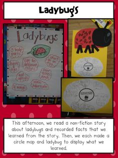 Grouchy Ladybug Idea. Love the aphid share and circle fact writing!