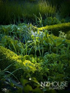 classy vege garden Garden News, Raised Garden Beds, Topiary, New Zealand, Garden Design, Home And Garden, Herbs, Landscape, Architecture