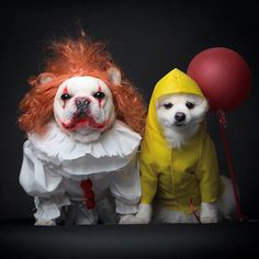Let your dog join in on the fun of Halloween with a fun costume. Here are some awesome ideas for when you take your dog trick or treating! Bulldog Halloween Costumes, Best Dog Costumes, Pet Costumes For Dogs, Halloween Costume With Dog, Funny Dog Costumes, Halloween Week, Cute Puppies, Cute Dogs, Chien Halloween