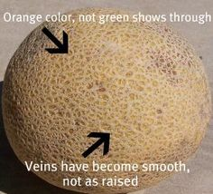 How To Tell When a Canteloupe is Ripe. Just smell it. You can smell how sweet it is when it's truly a good one Fruit And Veg, Fresh Fruit, Fruit Recipes, Cooking Recipes, Cooking Hacks, Cantaloupe Recipes, Fruit Snacks, Noodle Recipes, Health Recipes