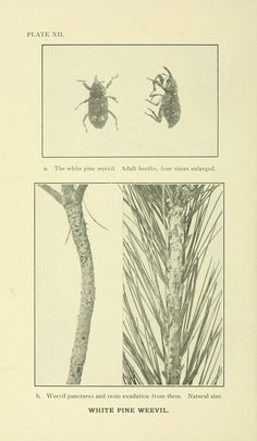 no.218 - Report of the State Entomologist of Connecticut for the year ... - Biodiversity Heritage Library