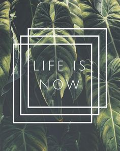 �� LIFE IS NOW �� Здесь и сейчас ... �� #жизнь #здесьисейчас #мгновение #миг #волшебство #nowandhere #life http://quotags.net/ipost/1568763027476682596/?code=BXFXaltg5dk