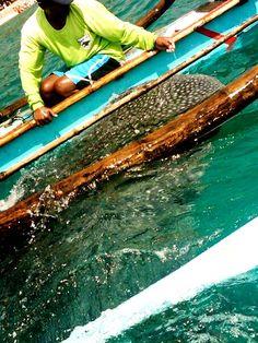 Traveling Morion: Morion's Travel: South Cebu plus Negros Oriental Get-away!