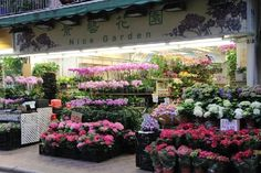 Flower Market hong kong - Google Search
