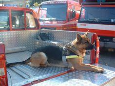 Kira, 11 anni di soccorso. I vigili del fuoco di Siena piangono il cane pompiere :http://www.qualazampa.news/2018/03/23/kira-11-anni-di-soccorso-i-vigili-del-fuoco-di-siena-piangono-il-cane-pompiere/