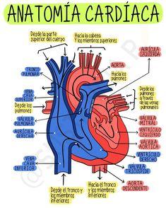 Medicine Notes, Medicine Student, School Notes, Med School, Studying Medicine, Biology Lessons, Medical Anatomy, Anatomy Study, School Study Tips