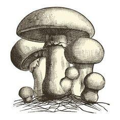 Learn How To Grow Mushrooms At Home #mushroombusinessathome #howtogrowmushrooms