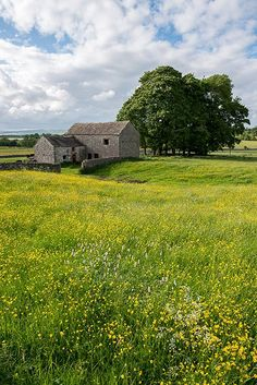 A barn in a buttercup field in Chelmorton, Peak District, Derbyshire ©SteveTuckerPhotography2013