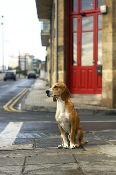 One unusual walk with best model Snoopy in old town of Nicosia. Great experience.