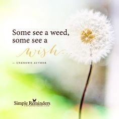 See the positive Some see a weed some see a wish... — Unknown Author and article by Becky Vollmer, . Focus on the Wish, Not the Weed. I don't spend a lot of time dwelling in the past — mostly because, for better or worse and especially as I age, I forget things the instant they've passed. But some moments stick with me, especially the ones I'm not proud of. I could live...