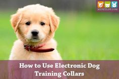 We have shown you a list of top electronic dog collars. Now, this guide will help you to How to Use Electronic Dog Training Collars perfectly!