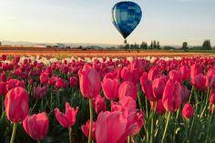 spring-dream1-0469