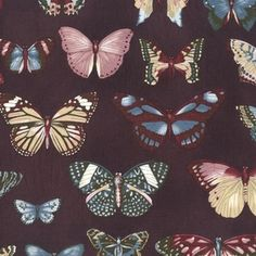 SEI - Field Notes - Butterfly Study in Nature
