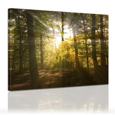 Forest Clearing Framed Photographic Print on Canvas Size: H x W x D Frames On Wall, Framed Wall Art, Birch Forest, 3 Piece Wall Art, Antique World Map, London Summer, Canvas Art, Canvas Prints, Deco