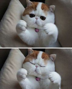 omg if this cat was up for adoption i would have to have it