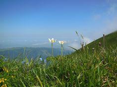 MOLESON - Gruyère - CH Switzerland, Mountains, Nature, Travel, Naturaleza, Viajes, Destinations, Traveling, Trips