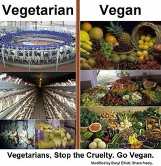 """No such thing as a """"compassionate vegetarian"""" -- GO VEGAN!"""