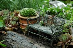 terrarium sized fairy homes | family to move in! The possibilities are endless!!