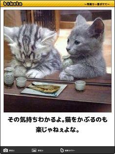 その気持ちわかるよ。猫をかぶるのも楽じゃねぇよな。