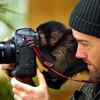 Singe photographe