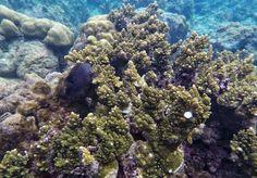 Snorkeling around El Nido, Philippines, duringisland hopping  tour A