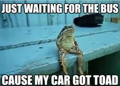 Just waiting for the bus cause my car got toad frog funny amphibian humor Lol, Haha Funny, Funny Cute, Funny Jokes, Funny Stuff, Funny Things, Funny Shit, Lame Jokes, Stupid Jokes