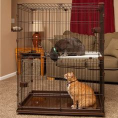 IRIS Animal Wire Cage with Wooden Perch and Hammock