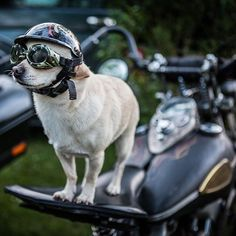 Paco - a dedicated Pike Rider ! Knuckle Head, Flat Head, Hot Rods, Brother, Waves, Instagram, Pictures, Ocean Waves, Beach Waves
