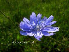 photographpurple flowernature photo8X10 photopurple by lisabones, $20.00