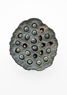 Shower Head - Nelumbo Nucifera photographed by Francis Ooi