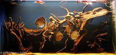 10 Tips on Designing a Freshwater Nature Aquarium Diskus Aquarium, Fish Aquarium Decorations, Biotope Aquarium, Aquarium Design, Planted Aquarium, Aquarium Ideas, Discus Tank, Discus Fish, Betta Fish