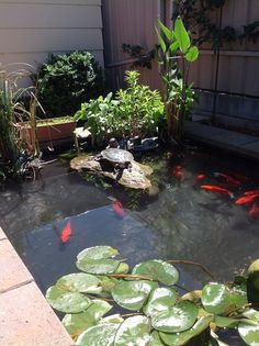 Tracy and Andrew's Pond...  Their Latest project. They do a great Job ! Turtle checking out his new rock!  just need a few Koi  but unfortunately they are banned in south Australia.....