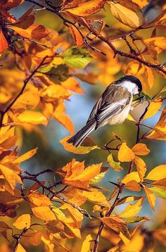 Enjoying The Glory - #Autumn