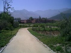 Errazurriz winery , aconcagua Valley , Chile