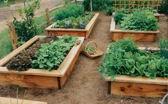 Pretty raised beds