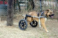 Iraq War Vet Donates New Set of Wheels to Dog
