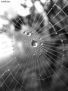 Spiderwebs are excellent subjects, especially just after the rain. When using your macro, tilt your camera around and see if you can get a pleasing background. Just because it's not in focus, doesn't mean it doesn't add to your photo!  Try it in black and white, and in color for very different results.