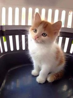 TOP 51 Funny cats and kittens pictures, # Kitten pictures Fluffy Kittens, Cute Cats And Kittens, Baby Cats, I Love Cats, Kittens Cutest, Ragdoll Kittens, Bengal Cats, Siamese Cats, Cute Animals Images