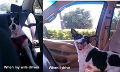 Funny Animal Pictures With Captions