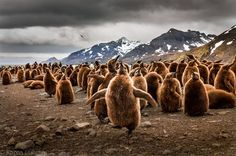 Happy Feet - a moment of joy Photo by Karen Lunney -- National Geographic Your Shot