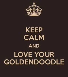 Platinum Goldies specializes in raising top quality Goldendoodle Puppies! We have Goldendoodle Puppies for sale now! Labradoodles, Goldendoodles, Goldendoodle Breeders, Keep Calm And Love, Love You, My Love, New Puppy, Puppy Love, Puppies For Sale