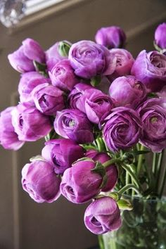 Ranunculus // These Look Like Purple Peonies, Don't Know If They Are The Same Colour My Flower, Fresh Flowers, Pretty Flowers, Cactus Flower, Spring Flowers, Bloom, Rose Violette, Deco Floral, Purple Roses