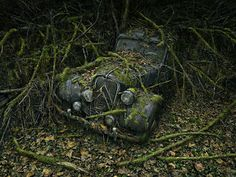 """""""Paradise Parking"""" is a photo series of antique cars that have been left to slowly decay in nature. The series is by photographer Peter Lippmann"""