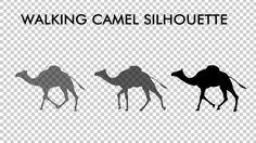 Walking Camel Silhouette