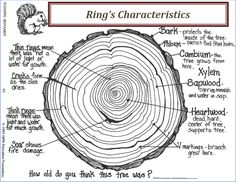 biology girl Characteristics of Trees Rings Tree Study, Tree Identification, Plant Science, Life Science, Science Nature, Creative Curriculum, Tree Rings, Little Bit, Forest School