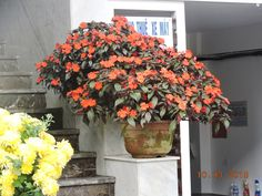 All doorways in Da Nang host flowers