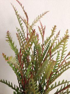 1 bunch, unknown fern