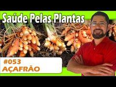 Saúde Pelas Plantas - Açafrão [pedra na vesícula, artrite, alergias, câncer, Alzheimer] - YouTube